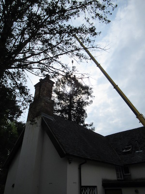 crane removal of trees over buildings.